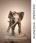 Stock photo baby elephant loxodonta africana mock charging etosha national park namibia 296041442
