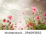 cosmos flowers in the rain... | Shutterstock . vector #296092832