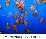 Group Of Orange Jellyfish On...