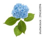 Hydrangea Flowerhead