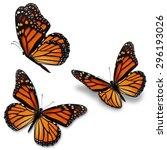 three monarch butterfly ... | Shutterstock . vector #296193026