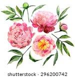 watercolor peonies set isolated ... | Shutterstock . vector #296200742