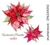 vector watercolor botanical... | Shutterstock .eps vector #296234342