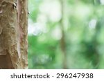 Eucalyptus Tree Trunk Closeup...