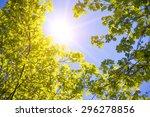 Blue Sky Through The Trees