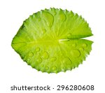 Green Leaf Water Lily And Water ...