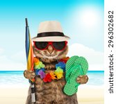 Stock photo funny cat going on vacation 296302682