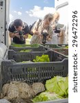Small photo of SZEGED, HUNGARY - JULY 14. 2015 - Hungary resend the confiscated Hermann's tortoises to Bulgaria from Szeged Zoo, photographers are in action