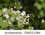 white clove flowers  syringa... | Shutterstock . vector #296511386