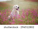 Beautiful Dog In Flowers Field...
