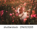 Stock photo dog jumping in the beautiful flower fields 296515205