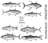 hand drawn salmon tuna and... | Shutterstock .eps vector #296628746