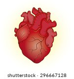 cartoon anatomical heart | Shutterstock .eps vector #296667128