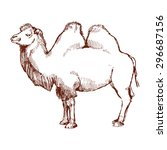 Hand Drawn Sketch Of A Camel....