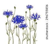 cornflowers on a white... | Shutterstock .eps vector #296755856