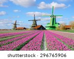 Fabulous Landscape With Tulips...