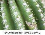 close up of a prickly cactus    Shutterstock . vector #296765942