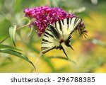 butterfly on flower | Shutterstock . vector #296788385
