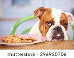 Sad Looking British Bulldog...
