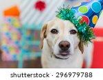 Close Up Of Dog Celebrating Hi...