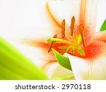 spring | Shutterstock . vector #2970118