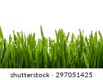 Green Grass And Dew