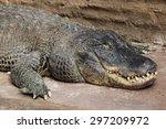 Small photo of American alligator (Alligator mississippiensis). Wildlife animal.