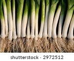 Row Of Leeks
