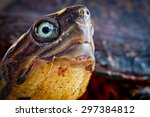 Turtle Close Up Studio Shot...
