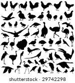 Farm Birds Silhouettes Big...