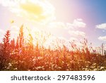 wildflowers field and blue sky... | Shutterstock . vector #297483596