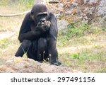 gorilla.   Shutterstock . vector #297491156
