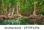 mangrove trees along the... | Shutterstock . vector #297591356