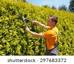 Man Gardener Trimming Hedge...