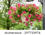 Petunia Flowers In Hanging...