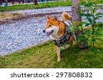 a cute japanese shiba inu puppy ... | Shutterstock . vector #297808832