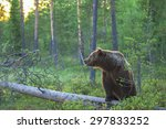 brown bear in the forest on a... | Shutterstock . vector #297833252