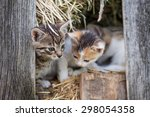 Stock photo little kitten in the old barn 298054358