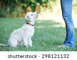 Dog Owner Teaching Pet Lurcher...