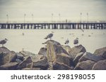 Seagull swimming on the Baltic sea. vintage photo