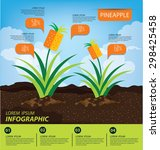 pineapple  infographics. fruits ... | Shutterstock .eps vector #298425458