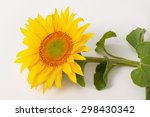 Large Sunflower. Close Up Of A...