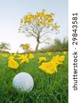 golf ball laying in grass near flowering yellow trumpet Tabebuia tree in florida - stock photo