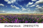 Beautiful View Of A Field Of...