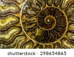 Spiral Fossilized Nautilus...