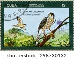"Small photo of CUBA - CIRCA 1976: A Stamp printed in CUBA shows of a Cuban Hawks ""Accipiter gundlachi"", a series of Birds, circa 1976"