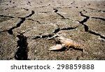 Crab Died On Crack Ground Due...