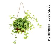 Hanging Basket Plant Isolated...