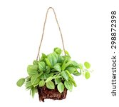 Hanging Basket Plant Isolated...
