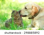 Stock photo friendly dog and cat resting over green grass background 298885892